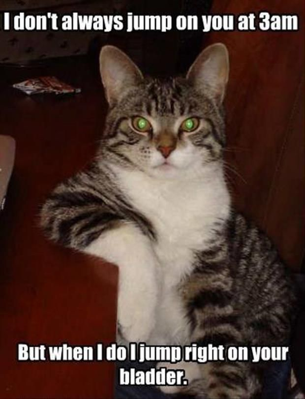 Funny Animals Of The Day 30 Pics Funny Animals Funny Cats Cute Funny Animals