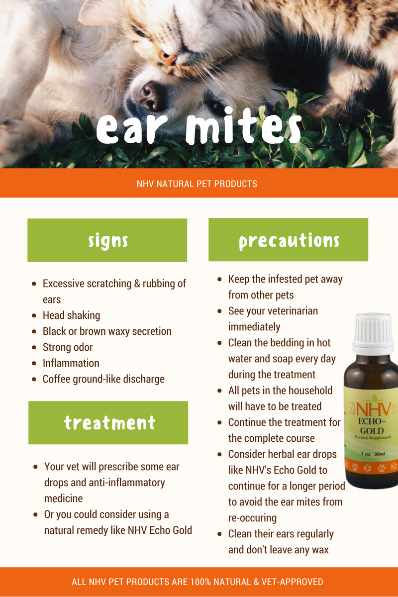 Echo Gold For Dogs In 2020 Dog Ear Mites Dog Ear Mites Treatment Cat Ear Mites