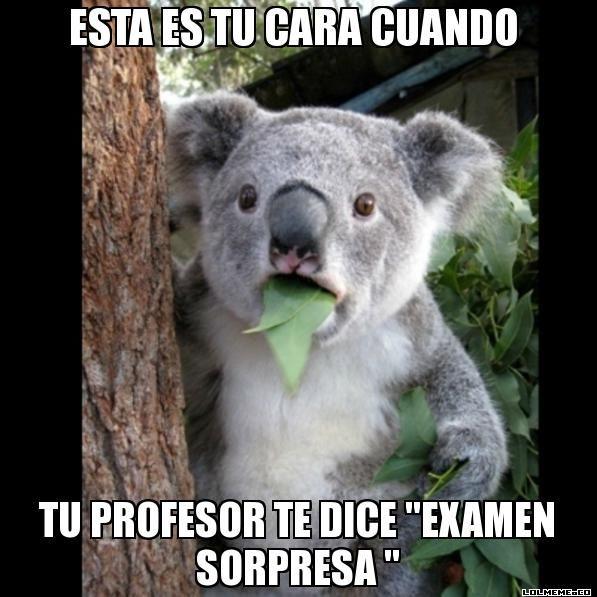 """ESTA ES TU CARA CUANDO  TU PROFESOR TE DICE """"EXAMEN SORPRESA """" - Koala Cant Believe It"""