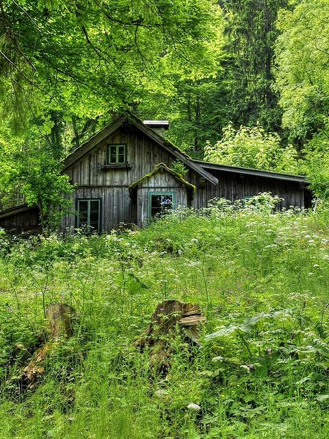 Old House In The Woods Flickr Photo Sharing