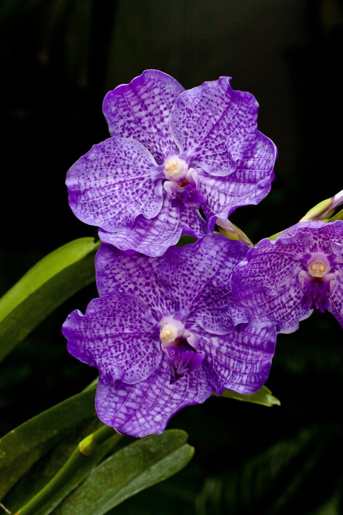 Pin by jazz shoeless on purple pinterest orchid