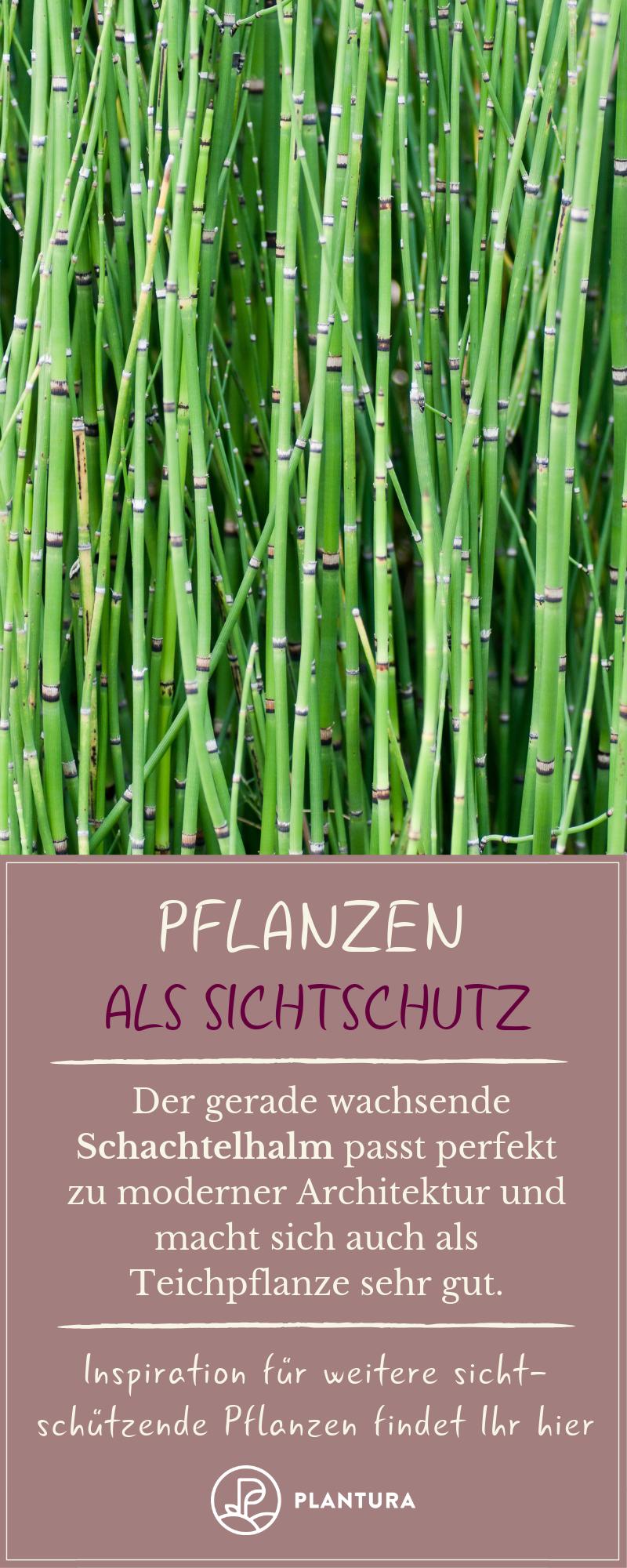 Pflanzen als Sichtschutz: Unsere Top 15 für Garten & Balkon - Plantura #bambussichtschutz