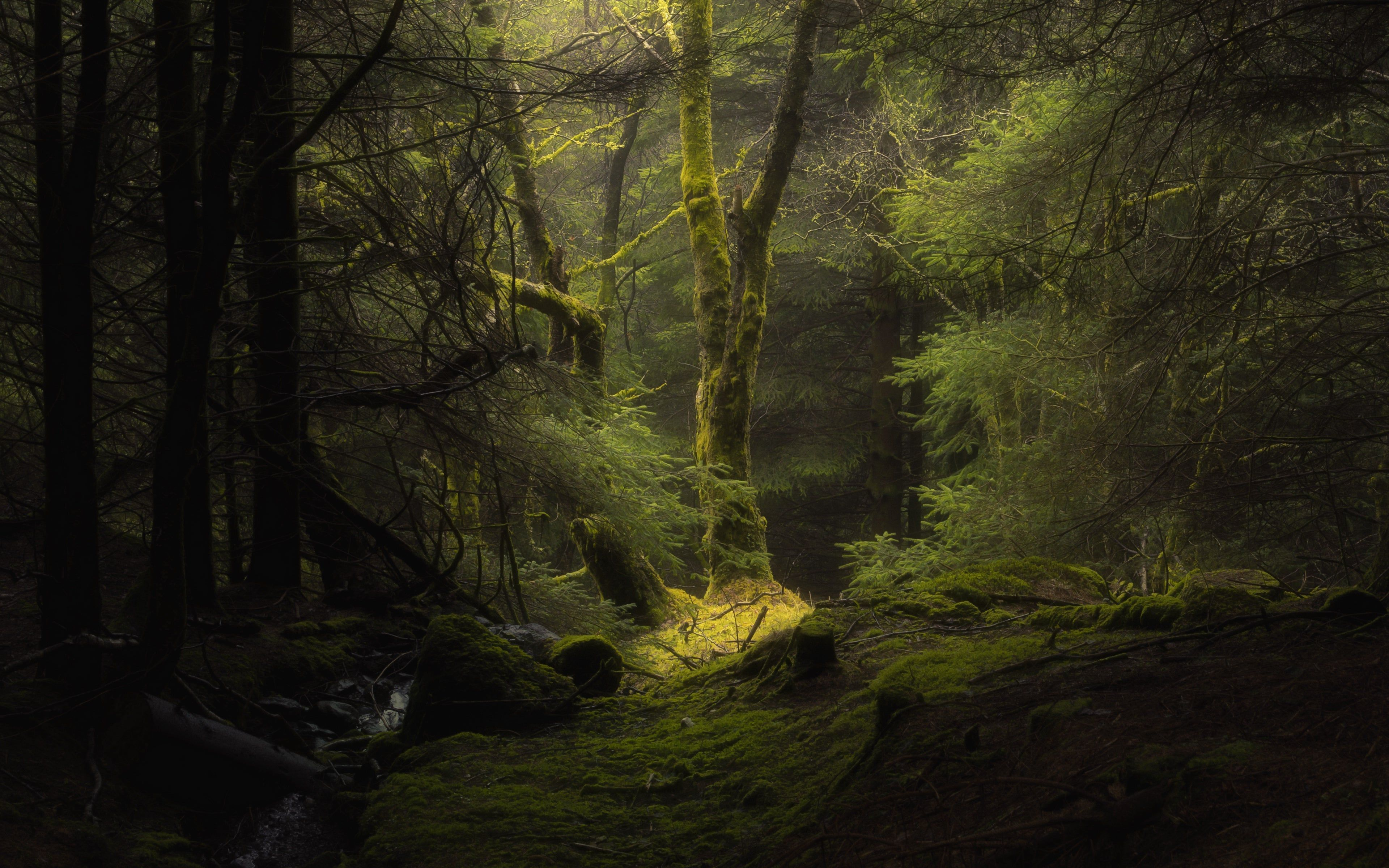 Amazing Inside View Of Forest 4k Wallpaper Forest Fog Hd Nature Wallpapers Nature Wallpaper