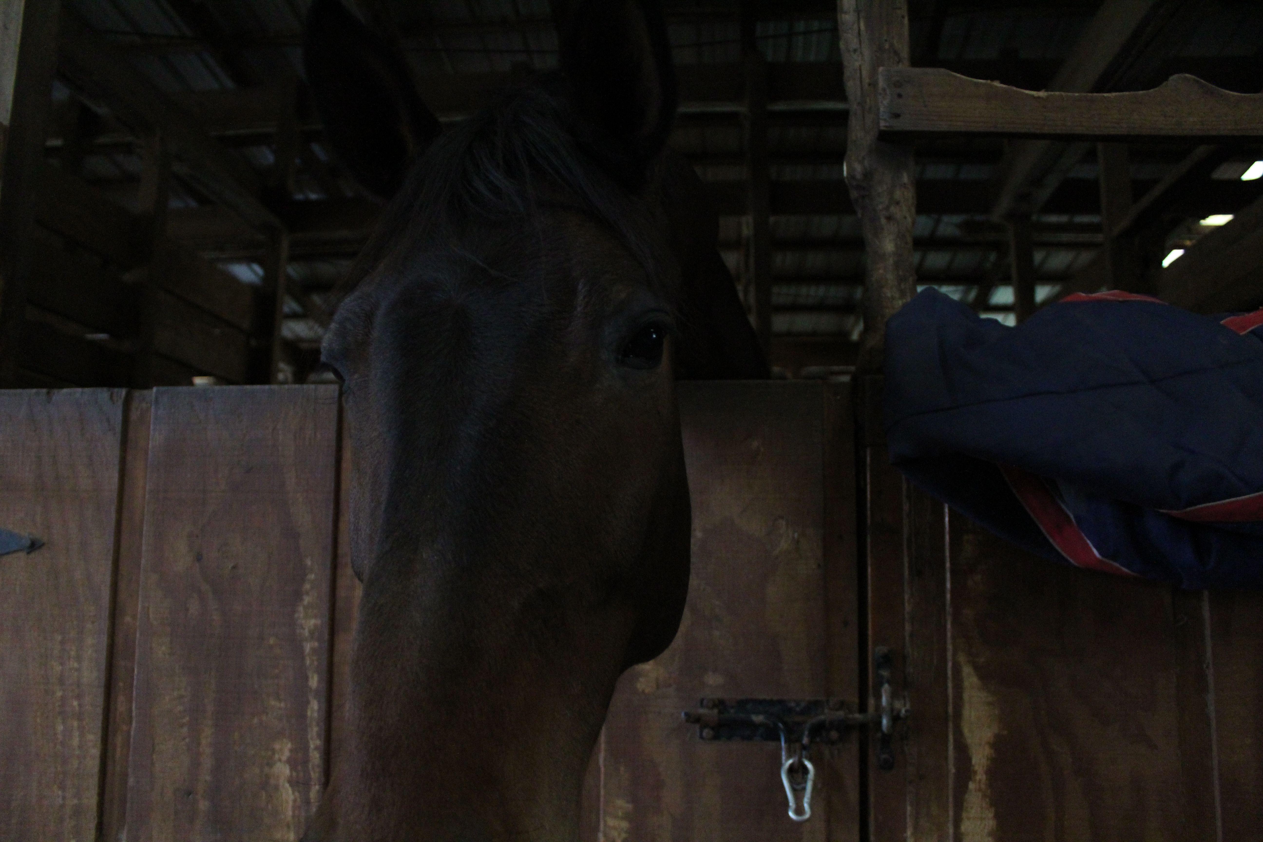 my horses attempt to eat my camera Horses, Animals