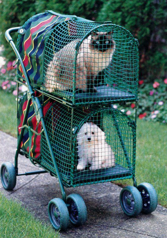 Double Decker Standard Pet Stroller Pet stroller, Dog