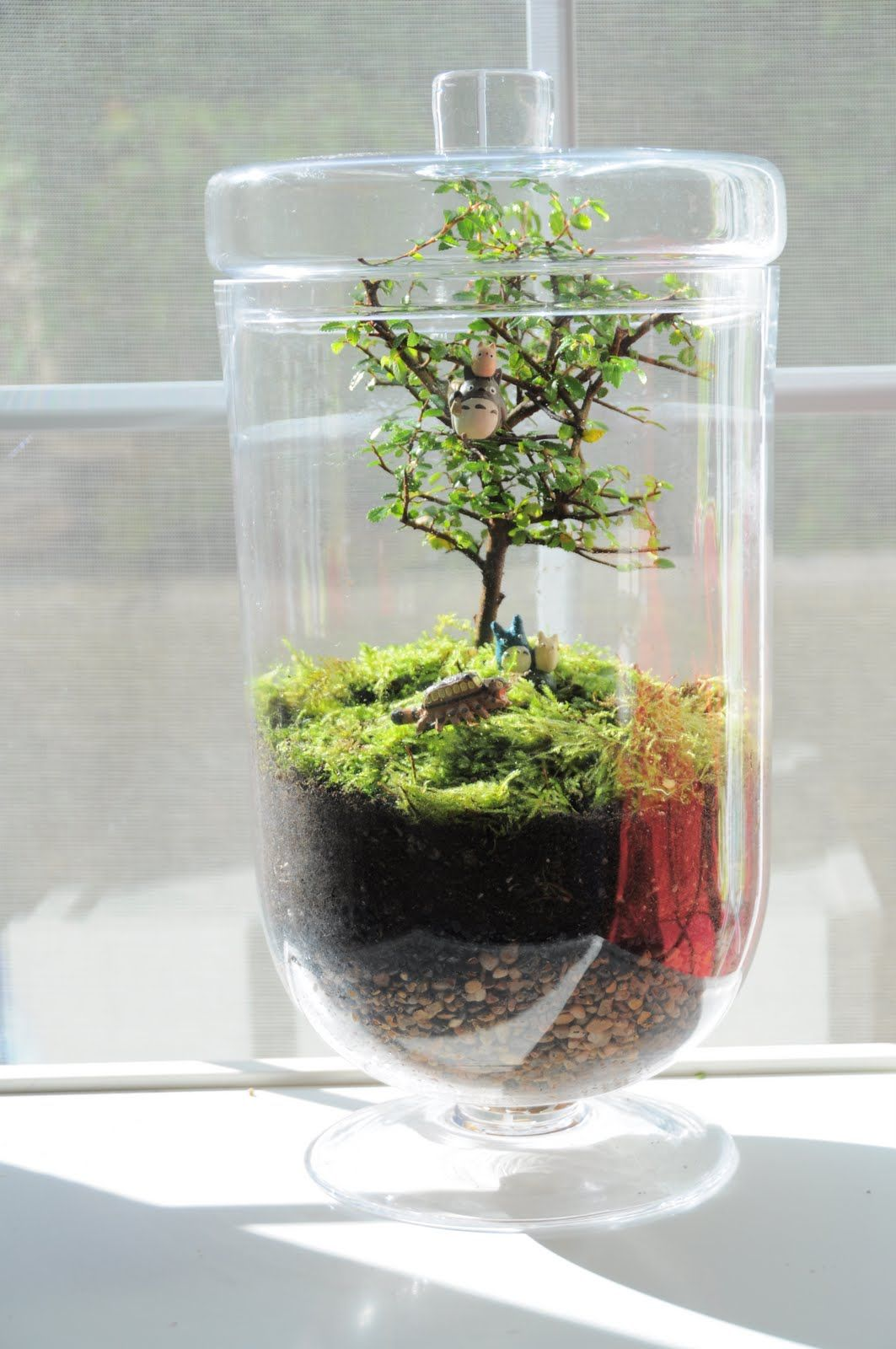 I love the idea of growing a bonsai inside a glass case for Indoor gardening glasses