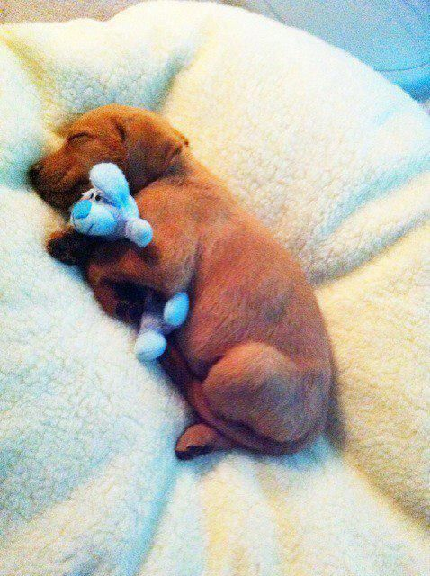 Even Puppies Need A Stuffed Animal To Cuddle Omfg