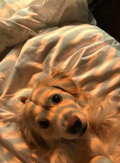 Photo of # melocotón #estético #goldenhour #cutedog #dog #cutepuppy