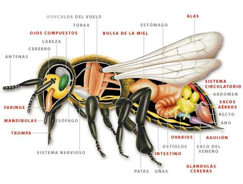 Glandulas seminoles yahoo dating