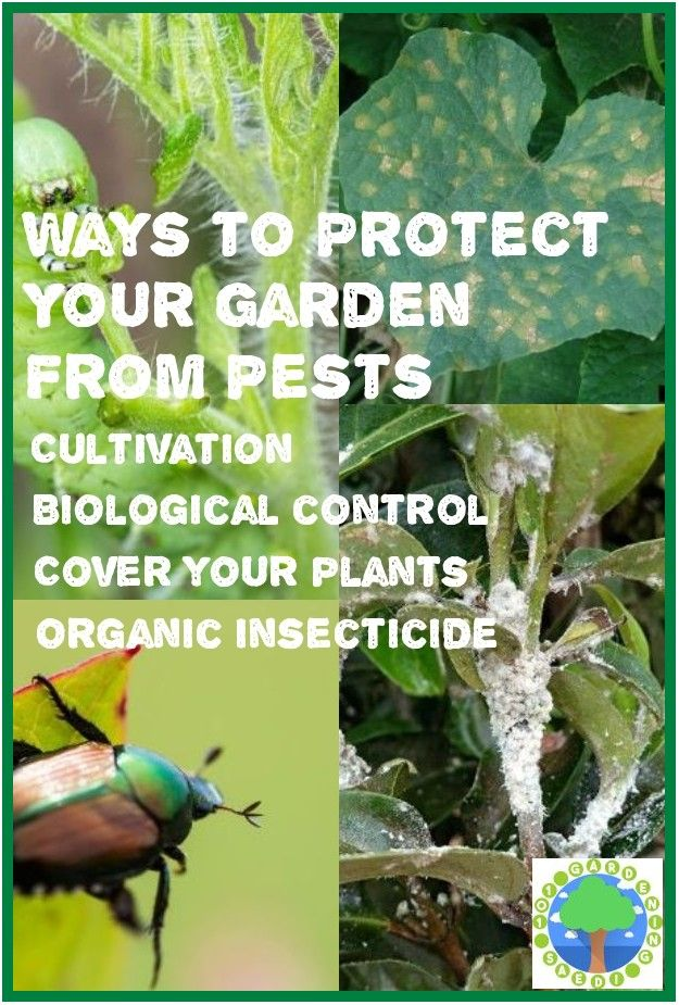 Safe And Effective Ways Of Natural Pest Control In 2020 With Images Natural Pest Control Pests Pest Control