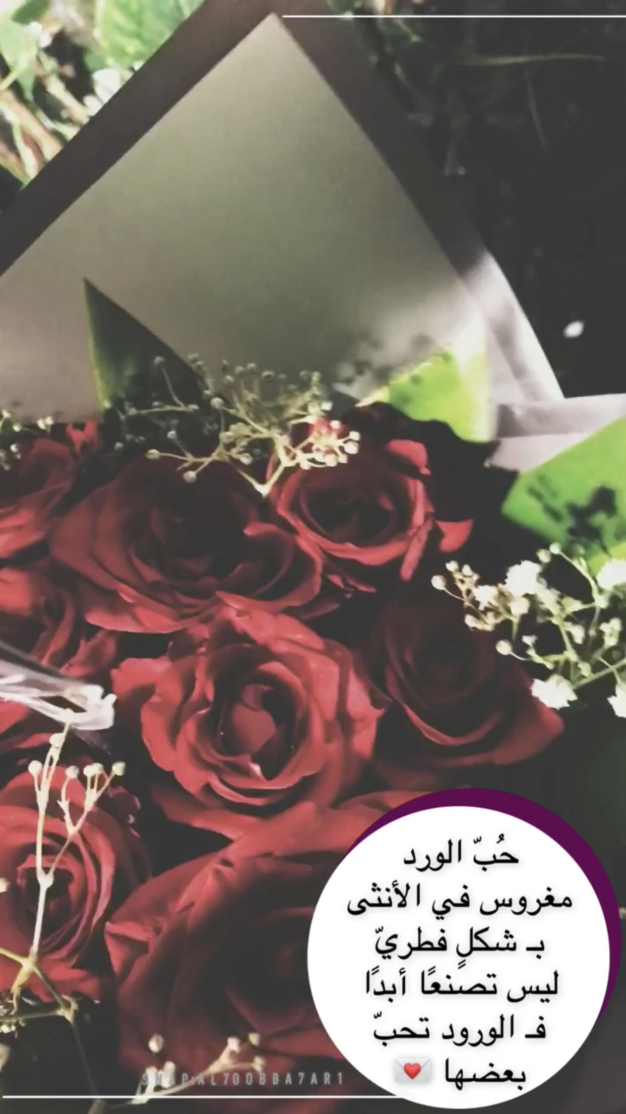 همسة ح ب الورد مغروس في الأنثى بـ شكل فطري ليس تصنع ا أبد ا فـ الورود تحب بعضها ت Pink Wallpaper Iphone Pink Wallpaper Iphone Wallpaper