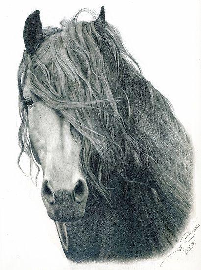 10 splendidi disegni a matita 10 beautiful drawings in for Cavallo disegno a matita