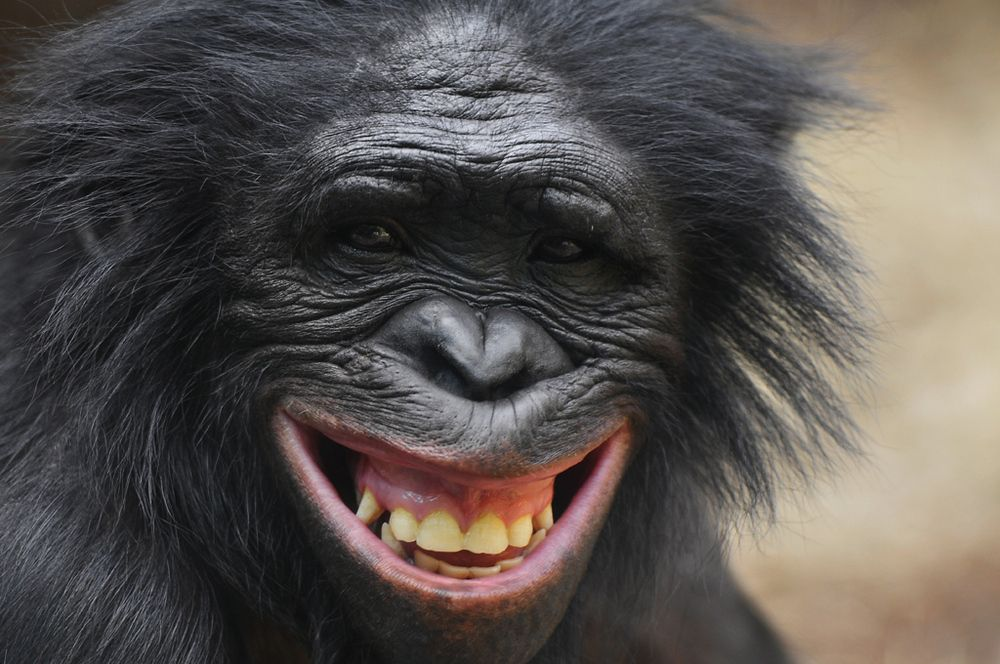 1418211028072 1000 664 Lachende Tiere Lachende Gesichter Lachen