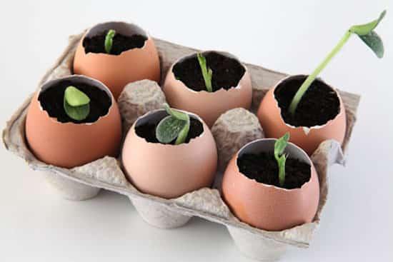 Utilisez les Coquilles d'Oeufs Comme Pots à Semis Pour Économiser ...