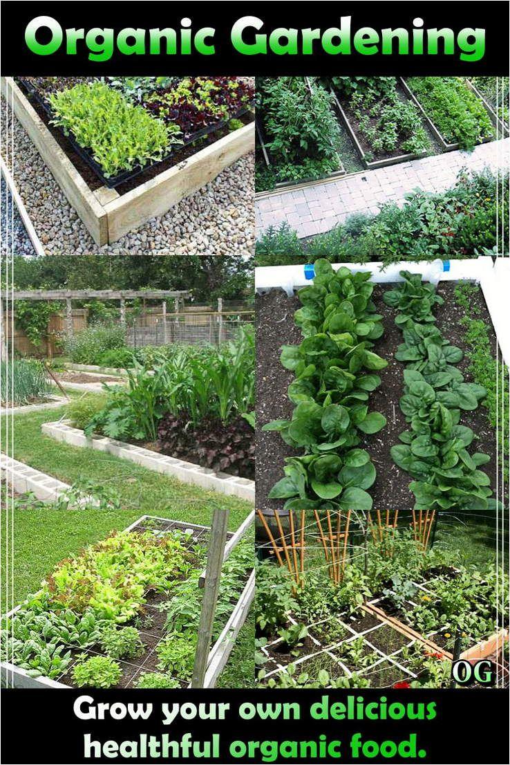 The Growth Of Organic Garlic Is Simple Plant Single 400 x 300