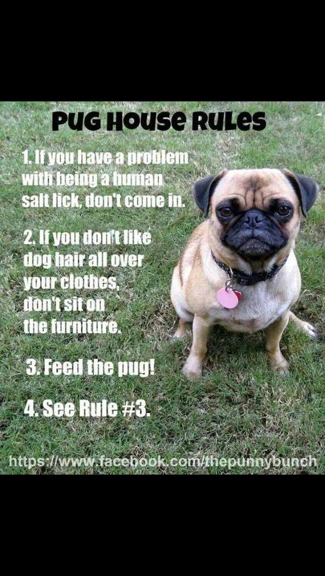 The Pug Rules Baby Pugs Pugs Funny Pugs
