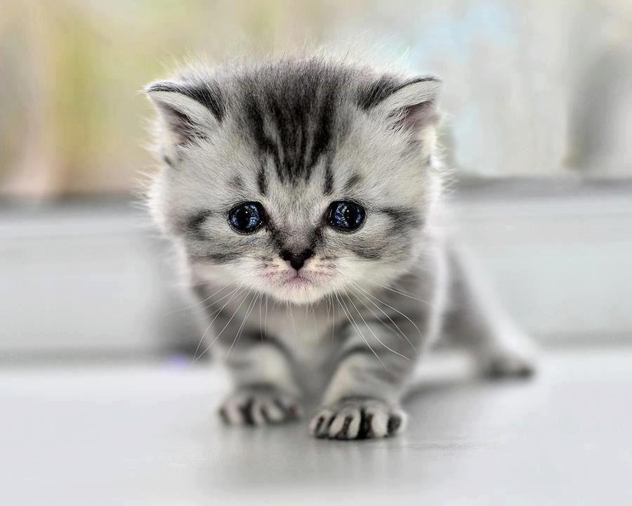 Me pareció ver un lindo gatito. Jajajaja