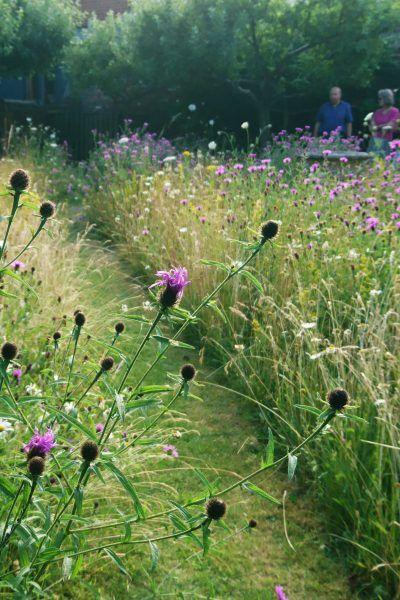 Photo of How to create a beautiful mini meadow garden
