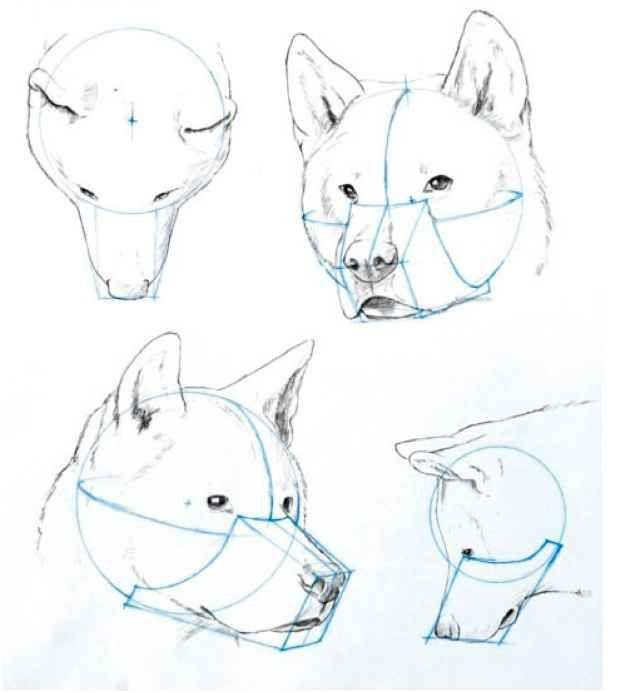 Canine Skeleton Drawing Human Figure Joshua Nava Arts How 2