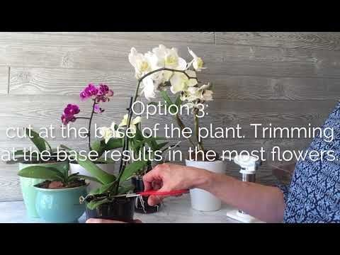 You Ve Enjoyed Your Orchid For Several Months And Now The Flowers Are Wilting And Dropping It Is Time Find Out Where To Trim The Flower Gardening Orchi