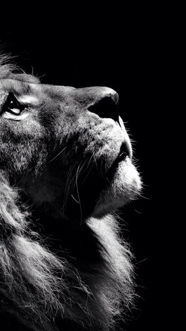 Lion Wallpaper Ios 8
