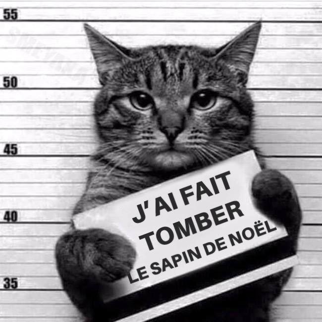 Chat coupable sapin de noel | Photo chat drole, Photo chat, Chat drôle