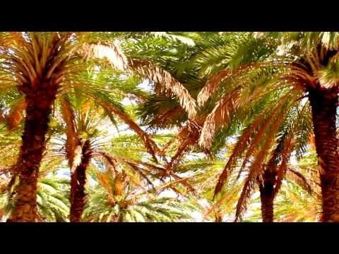 Miami Beat - YouTube