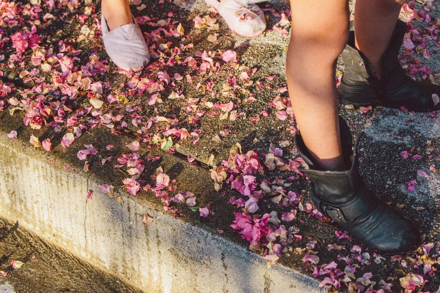 All Summer in a Day - Elizabeth Weinberg Photography