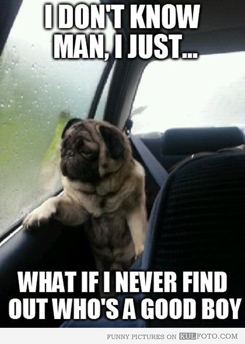 What If I Never Find Out Funny Dog Memes Funny Dog Pictures Pug Memes