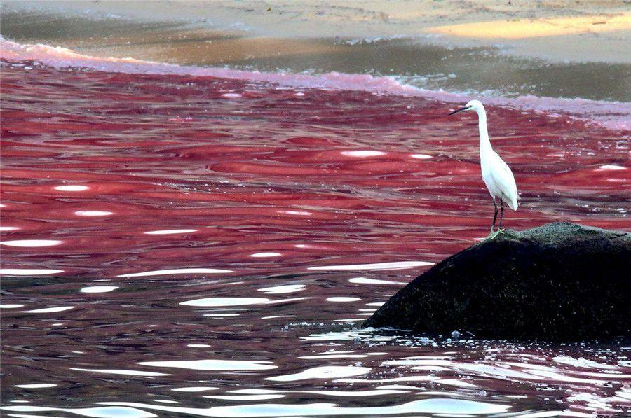 29++ Blood sea ideas