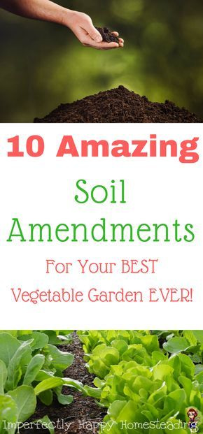 10 Amazing Soil Amendments For The BEST Vegetable Garden EVER. Organic  Gardening At Its Best