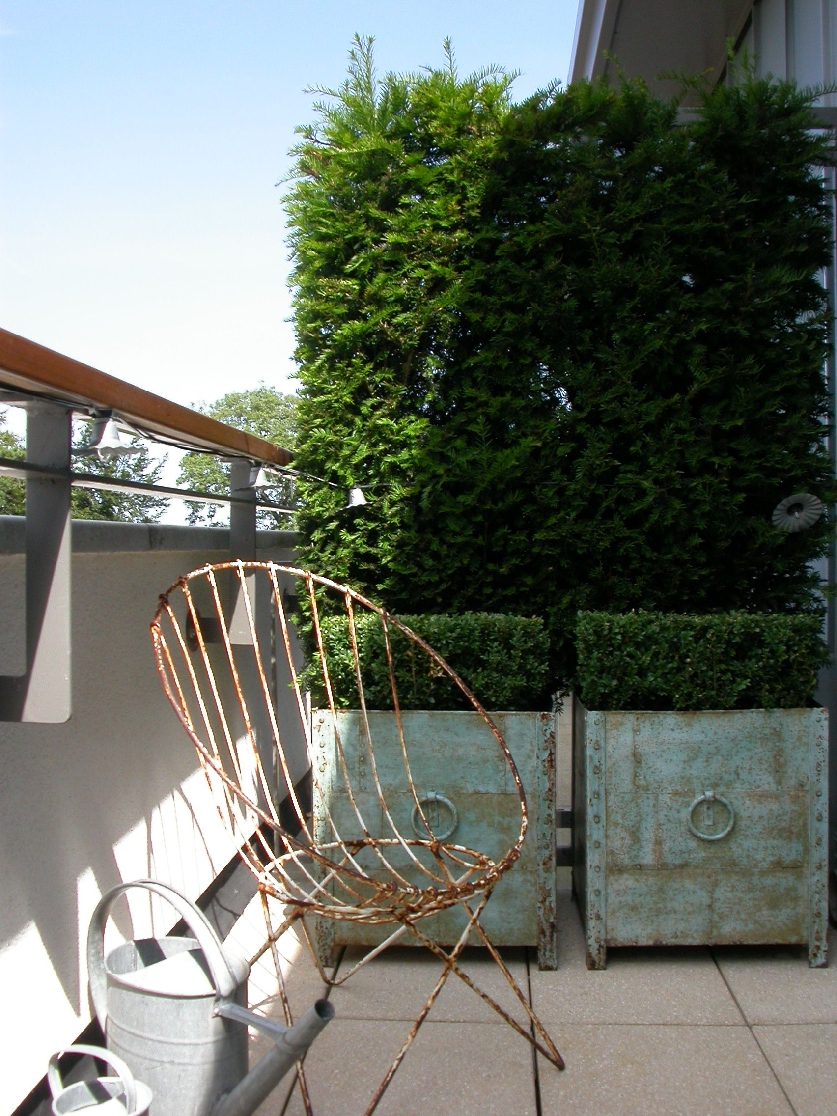 Instant screening using Yew hedging on Dublin city balcony
