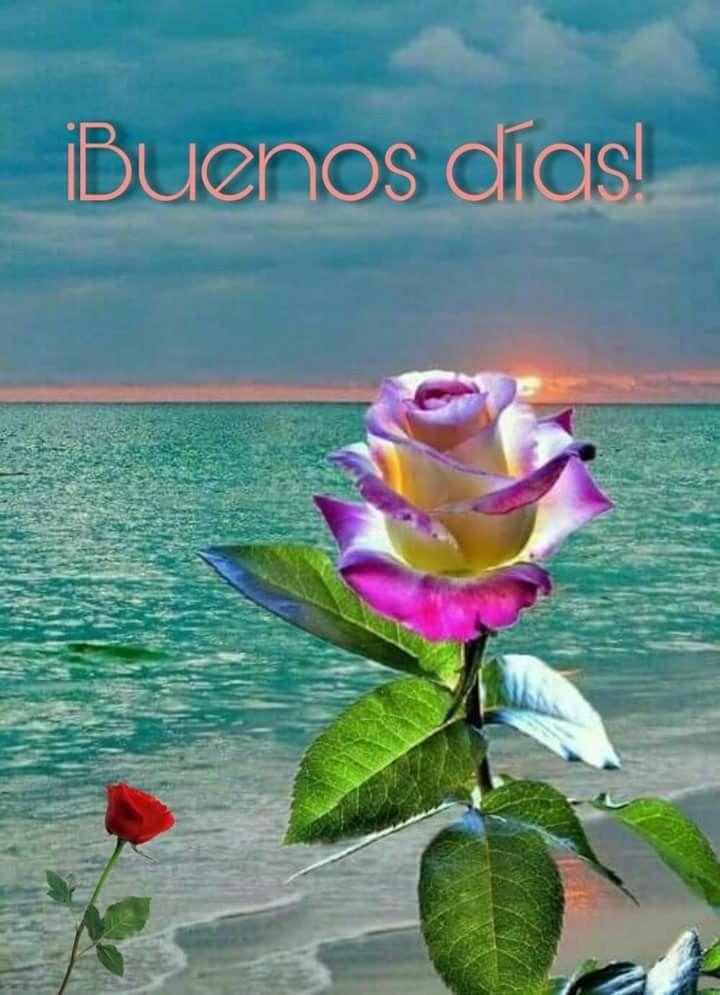 Pin de Juan Duclós en BUENOS DIAS-BUENAS NOCHES | Rosas bonitas, Flores  bonitas, Flores increíbles