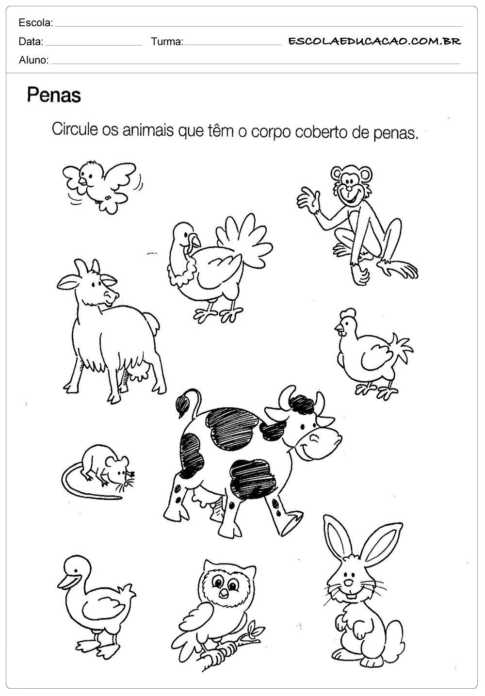 Muito Atividade de Ciências para Educação Infantil - Circule os Animais  WD53