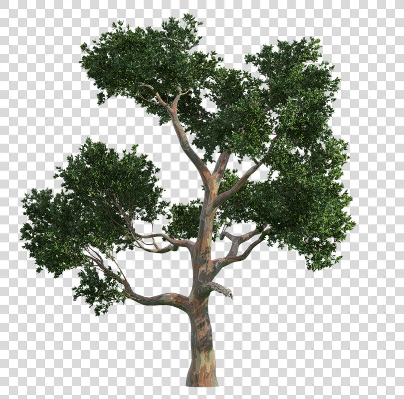 Pin By Png Drive On Trees Png Image Tree Png Images Herbs