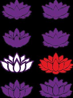 lotto flower buddhism  lotus image lotus flower
