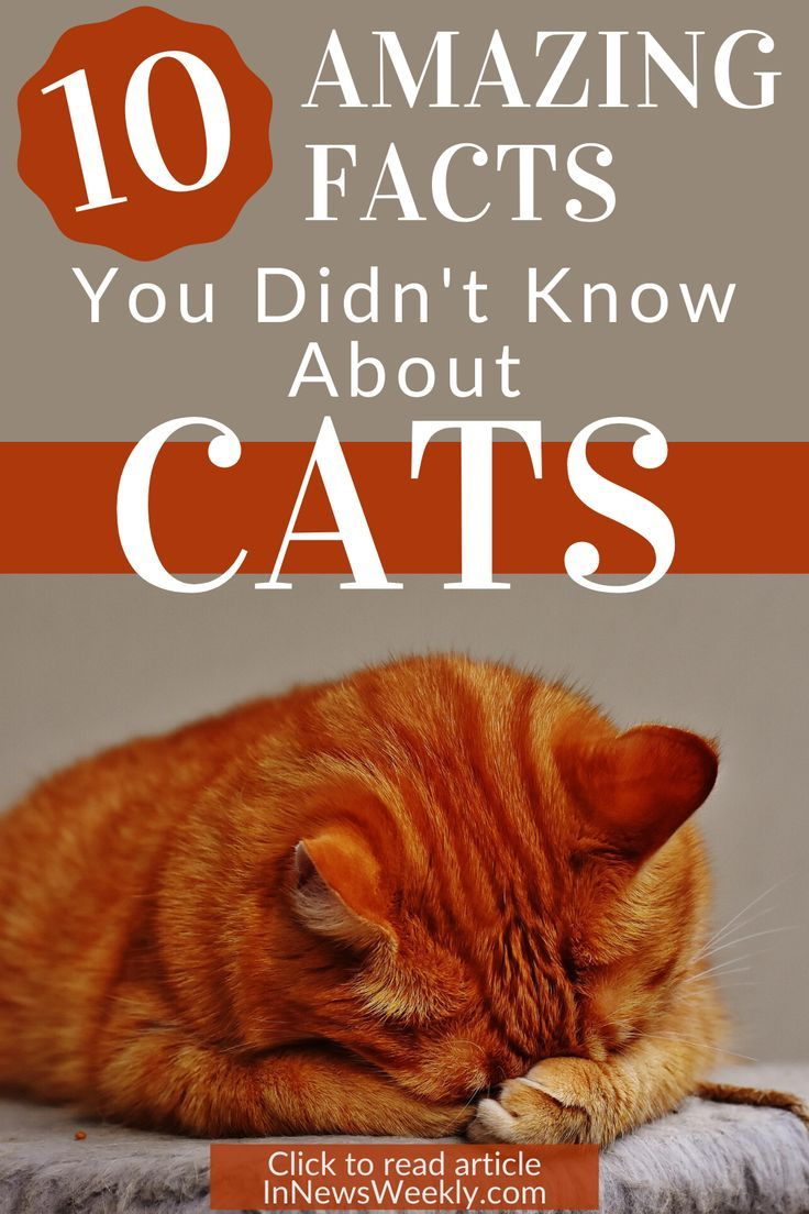 10 Interesting Facts About Cats That You Didn't Know (With