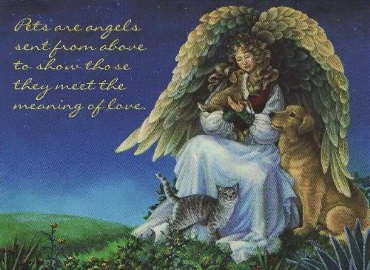 Who Knew That Cats Are Their Protectors >> Pet angels | Angels | Pinterest | Angel, Rainbow bridge and Dog