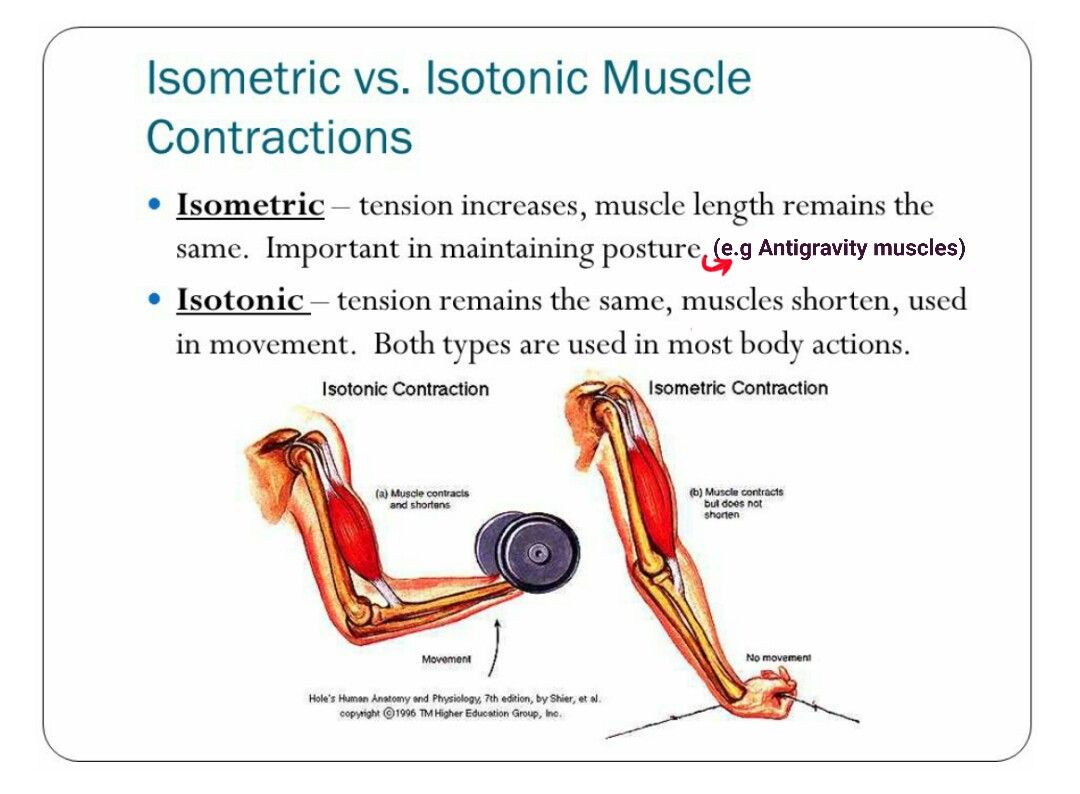 Isometric vs Isotonic muscle contraction... | physiology | Pinterest