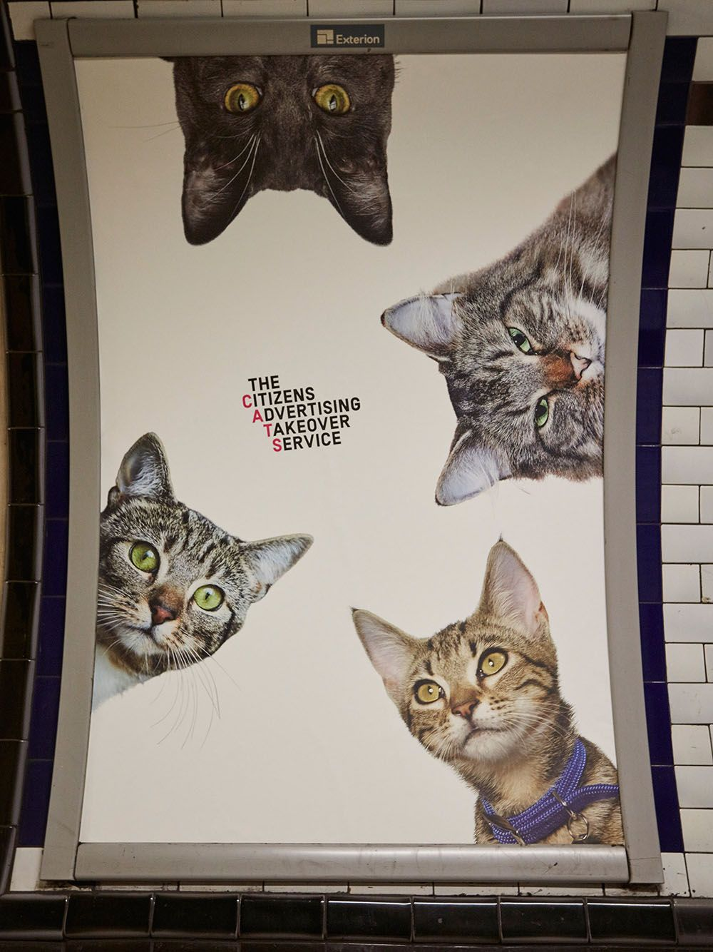 A Herd of Cats Fill Advertising Placements at a London