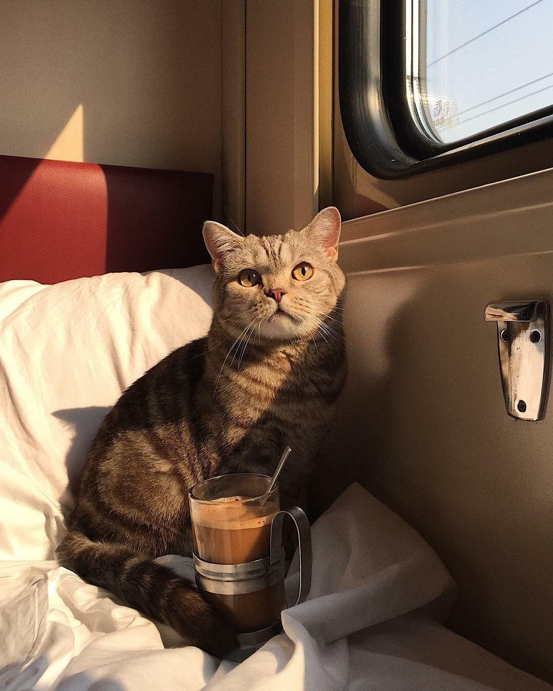кисулькен / кот / поезд  / вагон / кофе