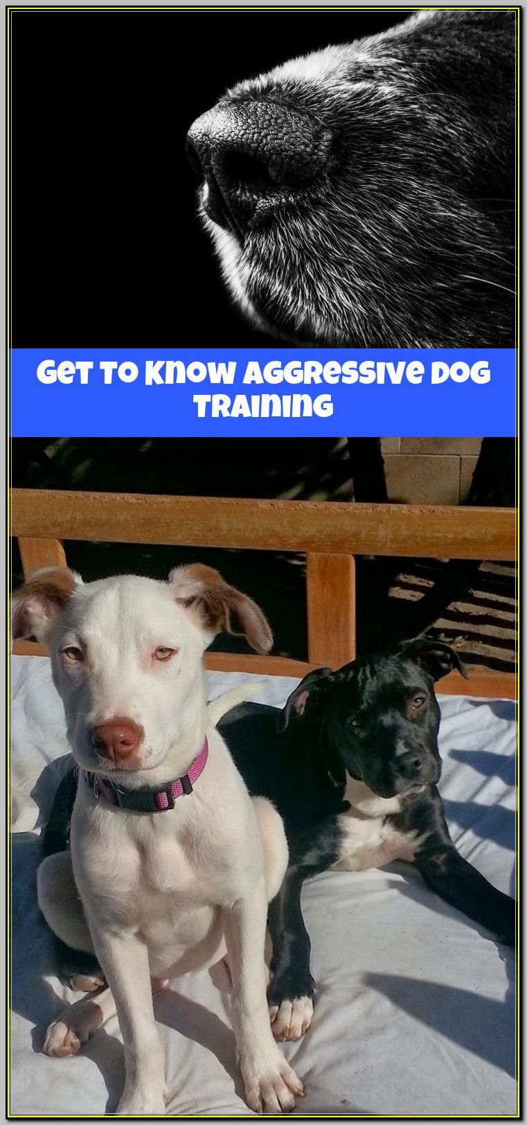 What To Do If You Need Aggressive Dog Training Dog Training