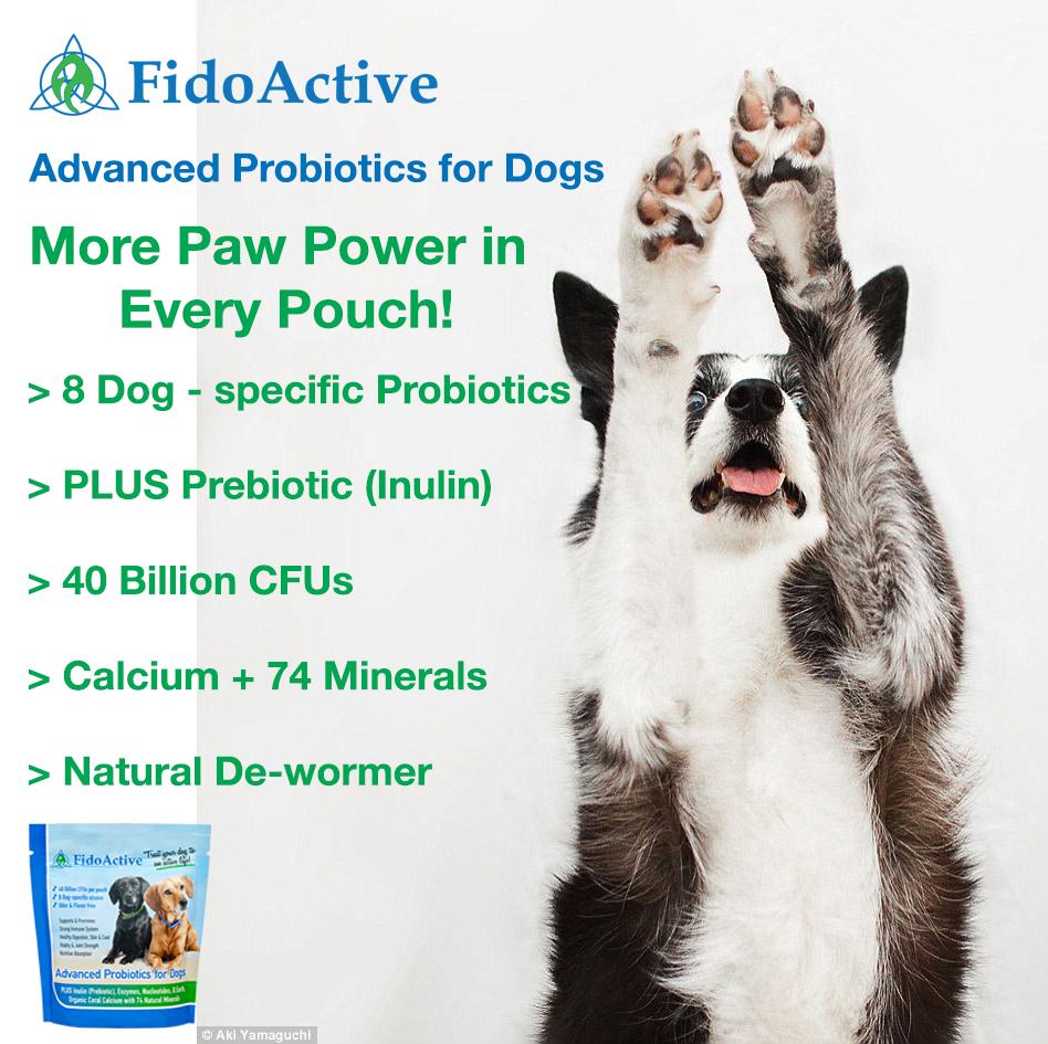 Improve You Dog Immune System! DOG SPECIFIC PROBIOTICS