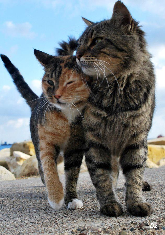 Pin On Tender Love Of Furry Ones Etc 2