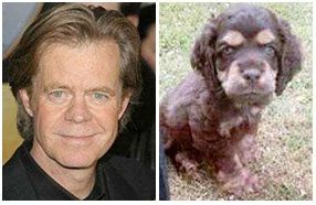 12 Dogs Who Totally Look Like Celebrities   12   - Three Million Dogs