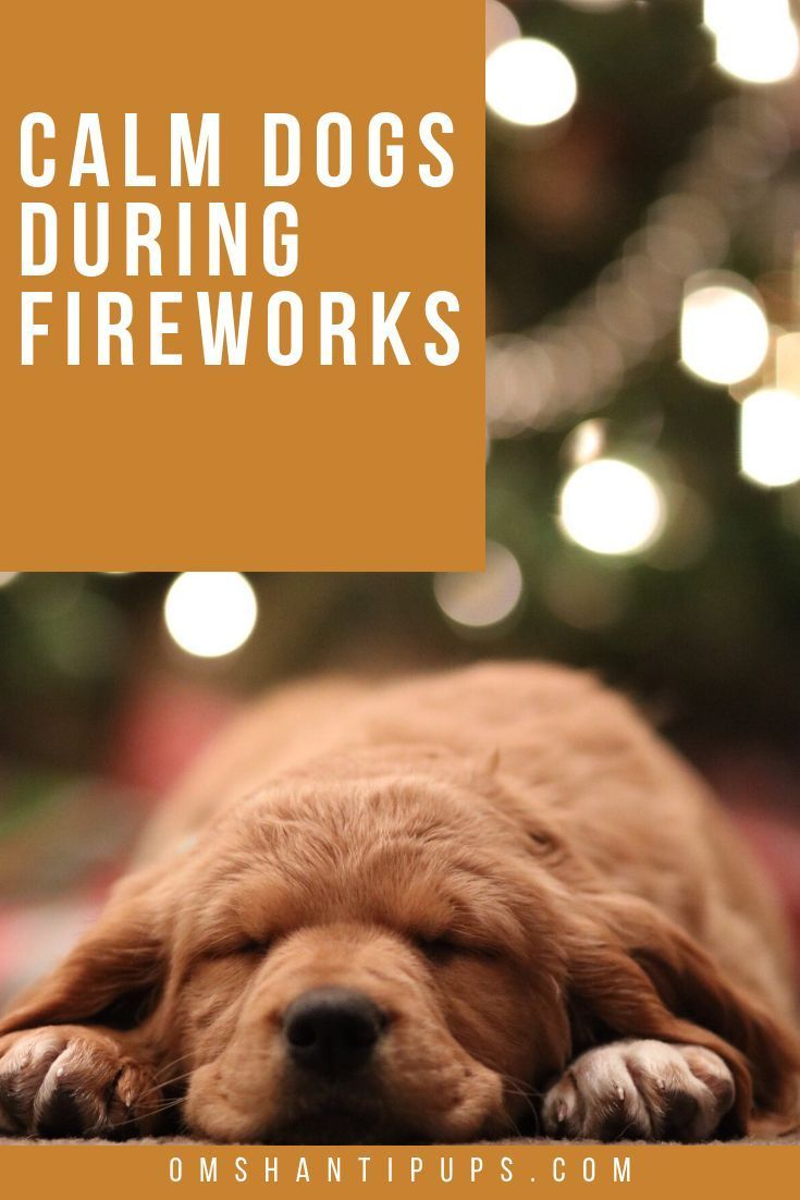 how to calm a stressed dog fireworks