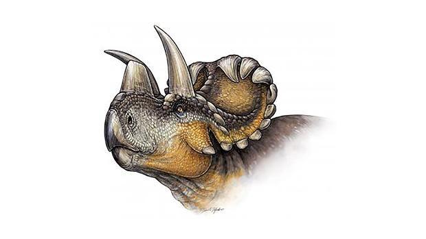 Pyntet hybrid-dinosaur er fundet i Canada | Viden | DR