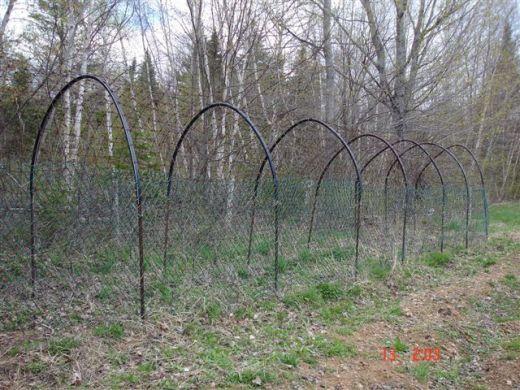 Bean Trellis--rebar, Plumbing Pipe, Welded Wire Fence