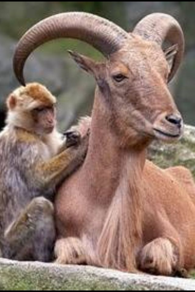 Веселые обезьянки картинки распечатать лучше