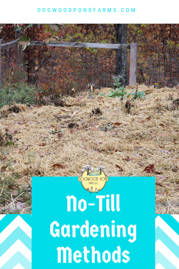 Find out which no-till gardening method you should choose to have a healthy, organic vegetable garden. For beginners and experienced gardeners.